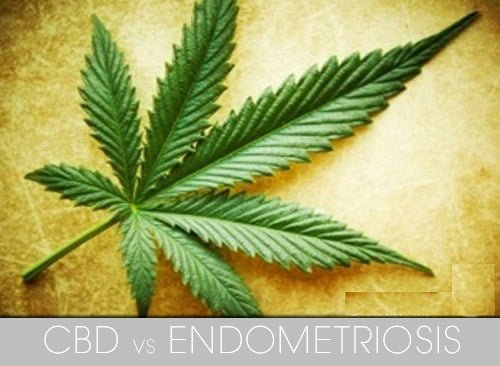 CBD vs Endometriosis